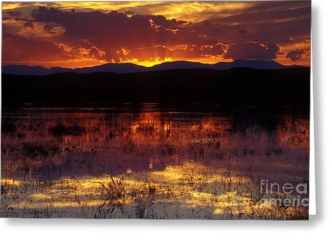 Bosque Sunset - Orange Greeting Card by Steven Ralser
