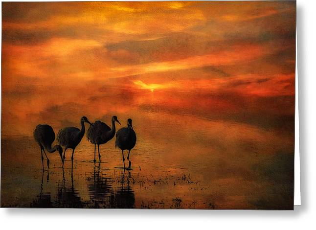 Wildlife Refuge. Greeting Cards - Bosque Sunset Greeting Card by Priscilla Burgers