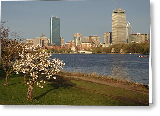 Charles River Greeting Cards - Boston Charles River on a Spring day Greeting Card by Toby McGuire