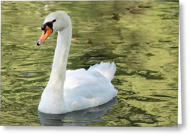 Boston Ma Greeting Cards - Boston Public Garden Swan Greeting Card by Jemmy Archer