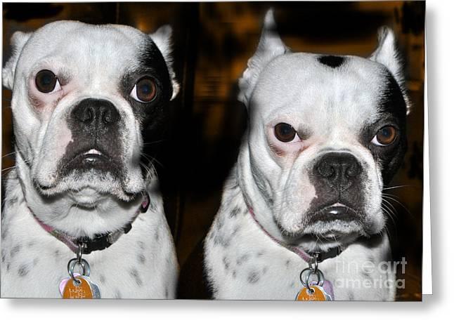 Boston Terrier Framed Prints Greeting Cards - Boston Terrier  Greeting Card by Ana Seminario