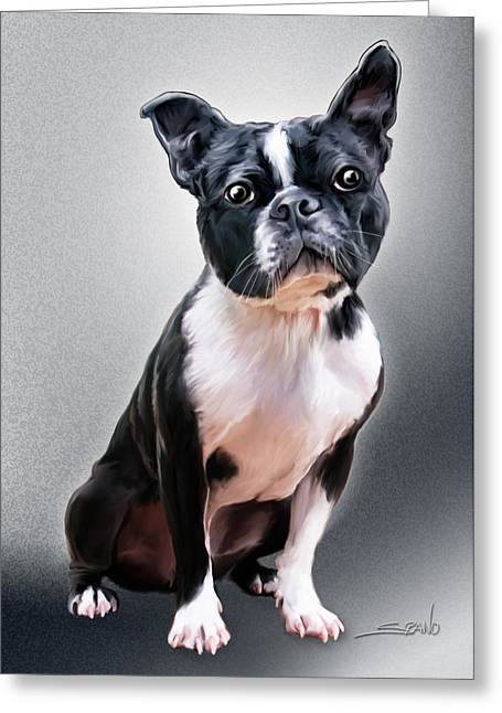 Spano Greeting Cards - Boston Terrier by Spano Greeting Card by Michael Spano