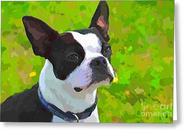 Boston Terrier Watercolor Greeting Cards - Boston Terrier Greeting Card by Dorothy Pinder