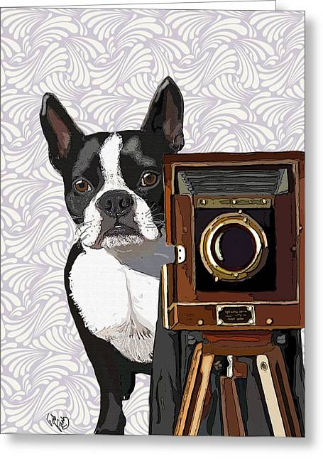 Boston Terrier Framed Prints Greeting Cards - Boston Terrier Photographer Look Doggie Greeting Card by Kelly McLaughlan