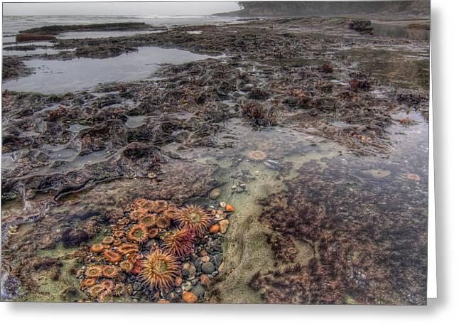 Port Renfrew Greeting Cards - Botanical Beach Greeting Card by James Wheeler