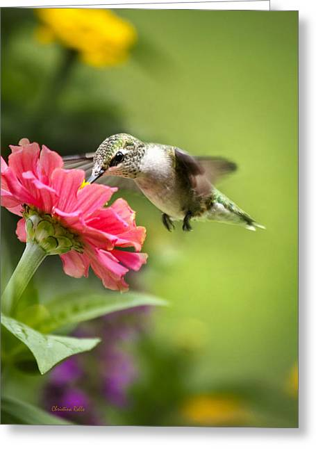 Hovering Greeting Cards - Botanical Hummingbird Greeting Card by Christina Rollo