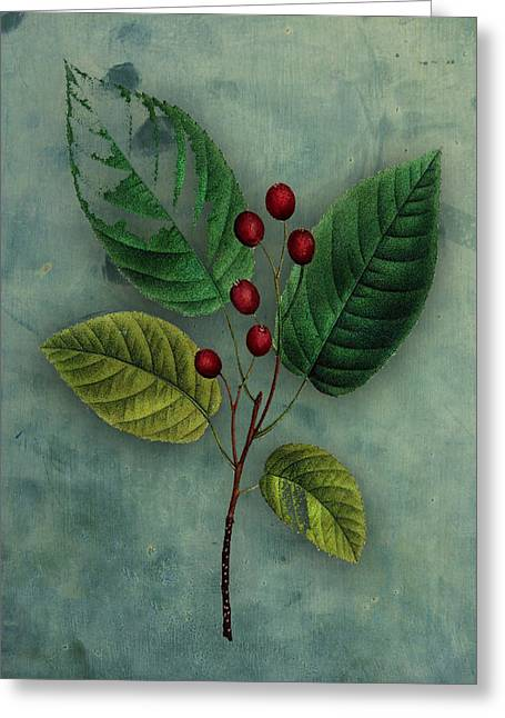 Fruit Tree Art Greeting Cards - Botanical Silva Greeting Card by Kandy Hurley