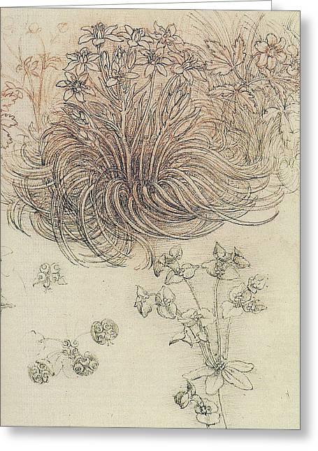 Star Of Bethlehem Greeting Cards - Botanical Study Greeting Card by Leonardo da Vinci