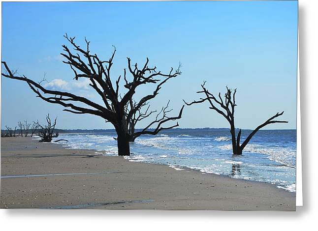 Outgoing Tide Greeting Cards - Botany Bay Beach Greeting Card by Linda Freed