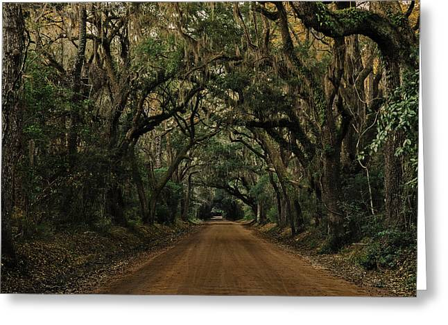Recently Sold -  - Moss Greeting Cards - Botany Bay Road Greeting Card by Kevin Senter
