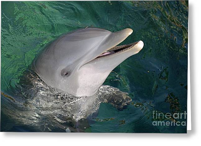 Emergence Greeting Cards - Bottle-nosed Dolphin in ocean Greeting Card by Sami Sarkis