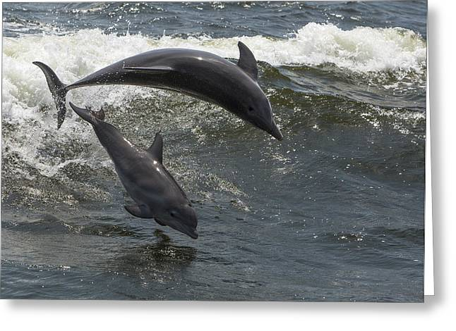 Surfing And Dolphins Greeting Cards - Bottlenose Dolphin 1 Greeting Card by Gerald Marella