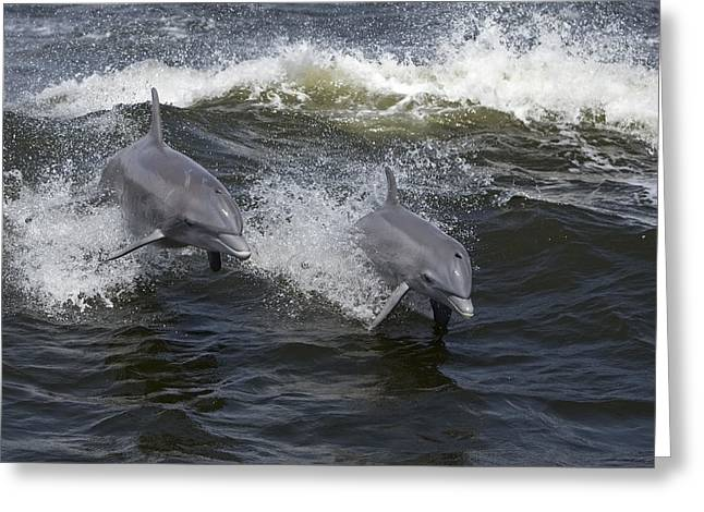 Surfing And Dolphins Greeting Cards - Bottlenose Dolphin 5 Greeting Card by Gerald Marella