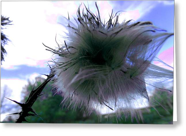 Bottomland Thistle Greeting Card by Erin Rednour