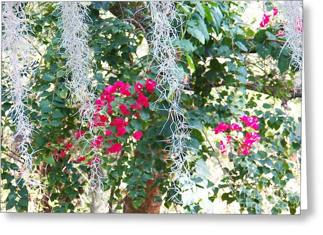 Fushia Greeting Cards - Bougainvillea 1 Greeting Card by Judy Via-Wolff