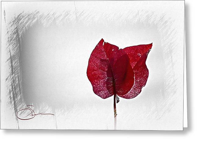 Red Greeting Cards - Bougainvillea 5 Greeting Card by Robert Smith