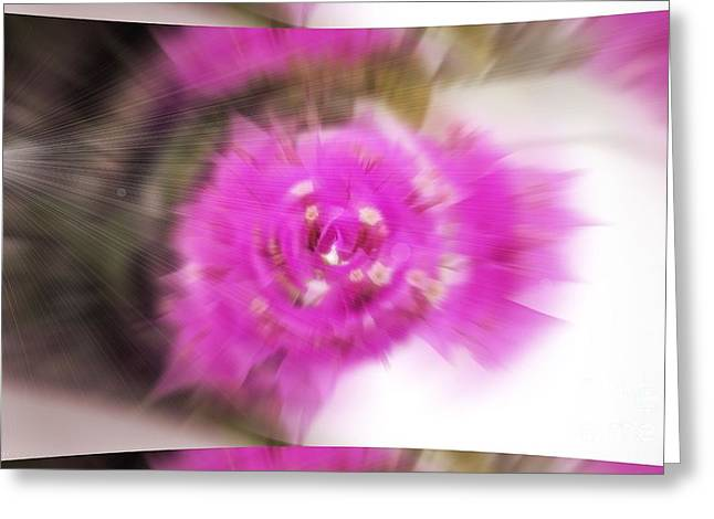 Subtle Colors Greeting Cards - Bougainvillea Abstract Greeting Card by Gena Weiser