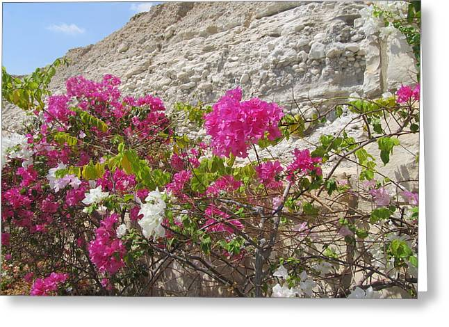 Landscape Framed Prints Greeting Cards - Bougainvillea at the Dead Sea Greeting Card by Esther Newman-Cohen