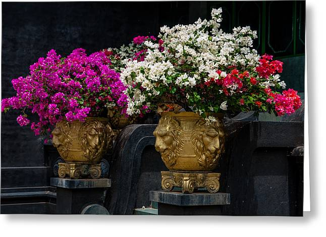 Ceylon Greeting Cards - Bougainvillea at the Entrance of Golden Temple in Dambulla  Greeting Card by Jenny Rainbow