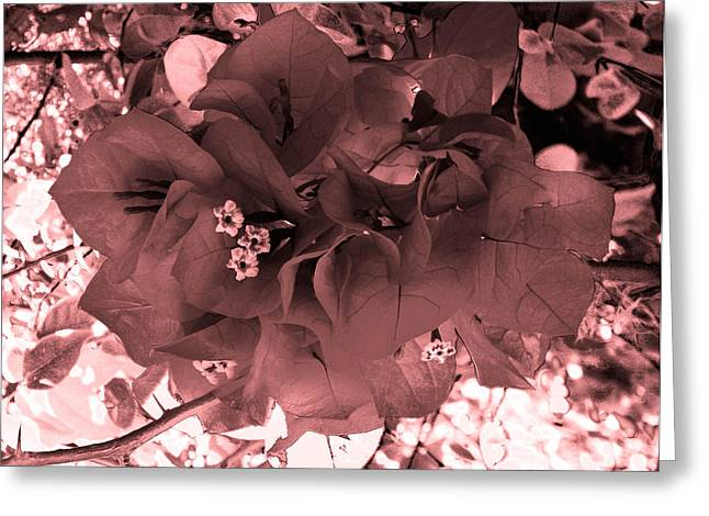Bougainvillea Monochrome Greeting Card by Christy Usilton