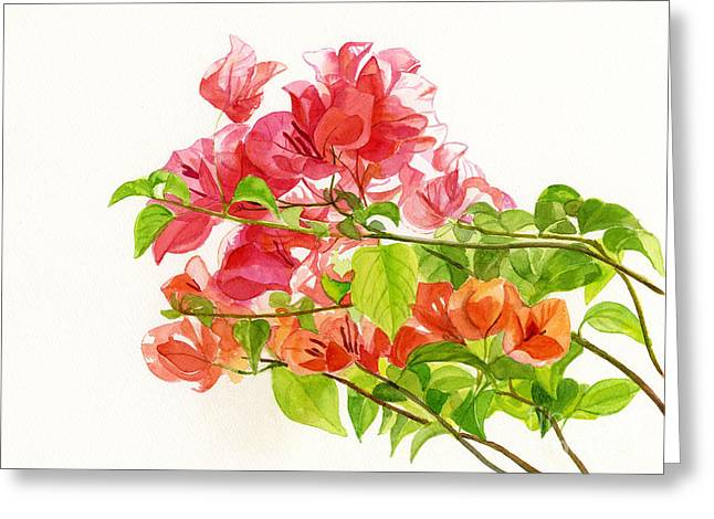 Pink Flower Branch Greeting Cards - Bougainvillea on White Background Greeting Card by Sharon Freeman