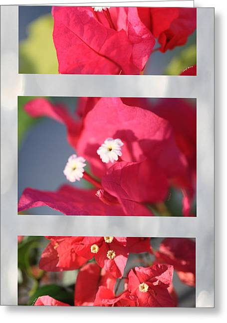 Nicaragua Greeting Cards - Bougainvillea Triptych Greeting Card by Cheryl Young