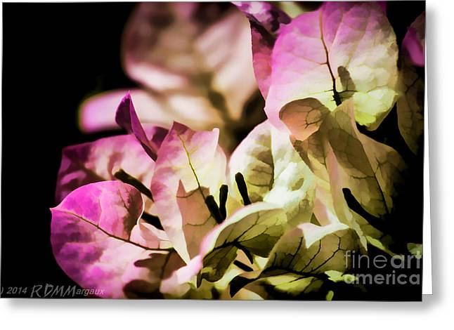 Surprise Greeting Cards - Bougainvillea Up Close Greeting Card by  rdm-Margaux Dreamations
