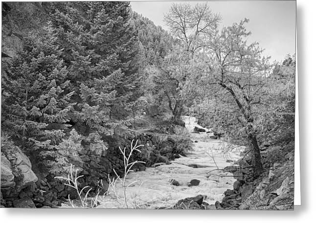 Snow Tree Prints Greeting Cards - Boulder Creek Winter Wonderland Black and White Greeting Card by James BO  Insogna