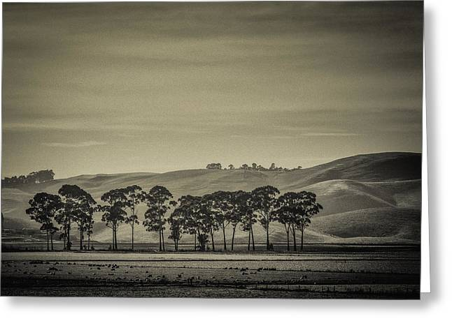 Black And White Nature Landscapes Greeting Cards - Boundaries Greeting Card by Constance Fein Harding