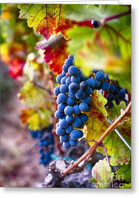 Fruit On The Vine Greeting Cards - Bounty of Napa Valley I Greeting Card by George Oze