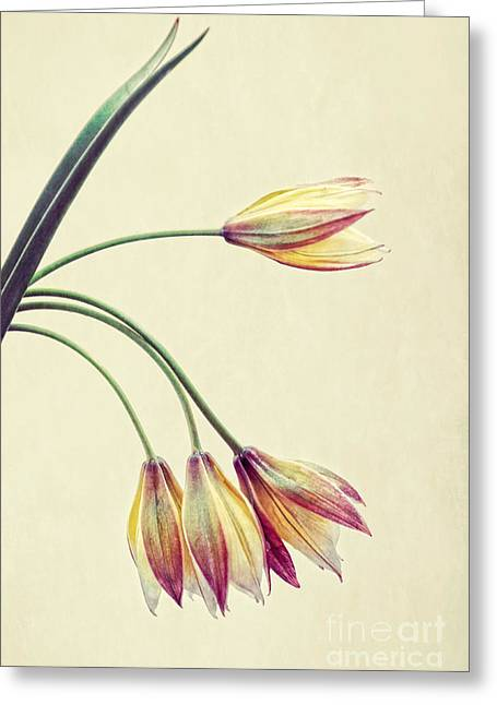 Texture Flower Greeting Cards - Bouquet Greeting Card by HD Connelly