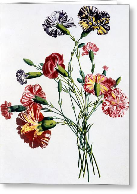 Vase Of Flowers Greeting Cards - Bouquet of Carnations Greeting Card by Jean-Louis Prevost