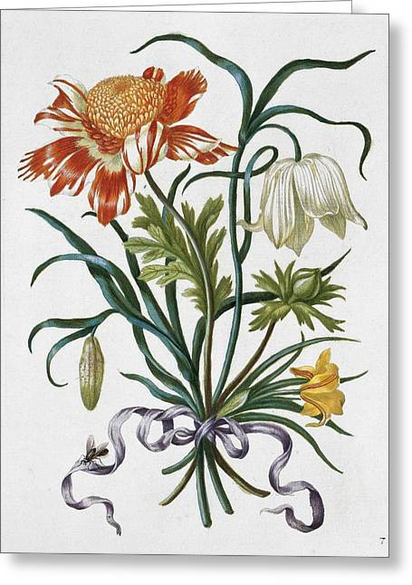 New Greeting Cards - Bouquet of flowers, 17th century artwork Greeting Card by Science Photo Library
