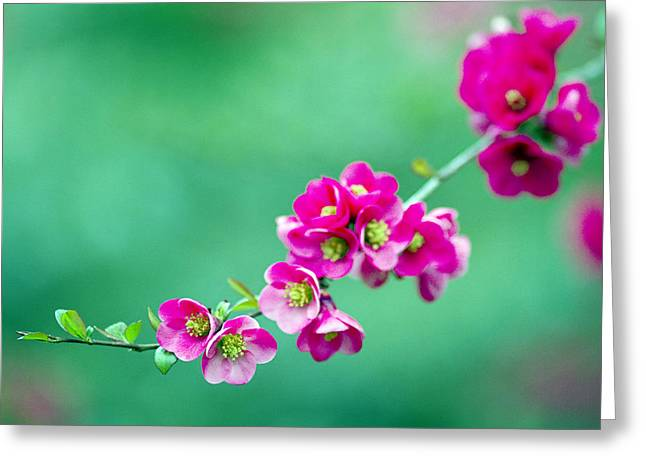 Bouquet On A Limb Greeting Card by Rebecca Cozart