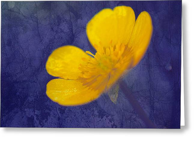 Flowers Photographs Greeting Cards - Bouton d Or - tb01c Greeting Card by Variance Collections