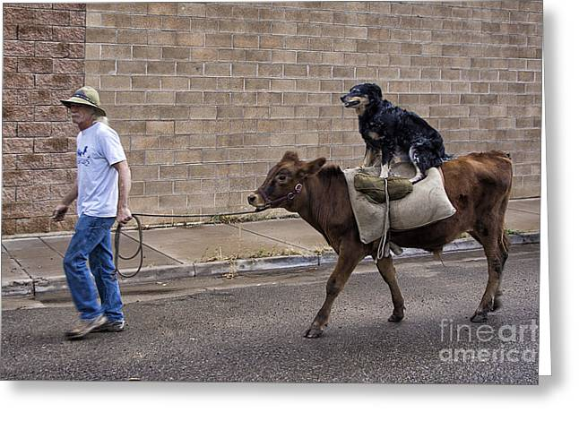 Mancos Greeting Cards - Bovine Riding Canine Greeting Card by Priscilla Burgers