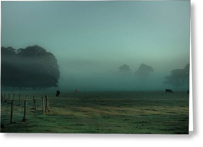 Bovines In The Mist Greeting Card by Chris Fletcher