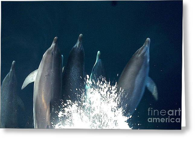 Ocean Mammals Greeting Cards - Bow Riders Greeting Card by Donnie Freeman
