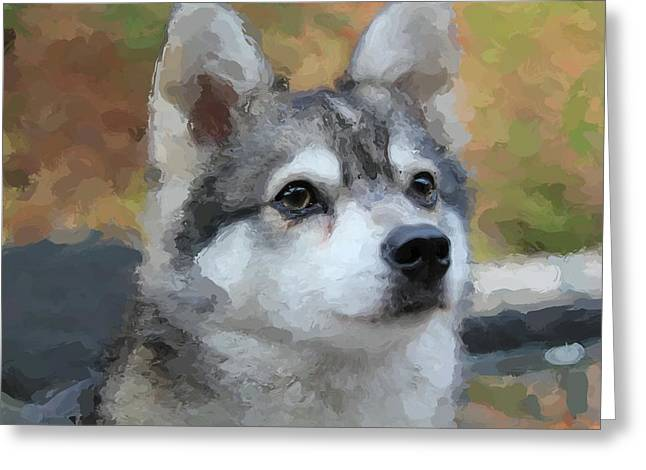 Husky Greeting Cards - Bowie Greeting Card by Everett Griffin