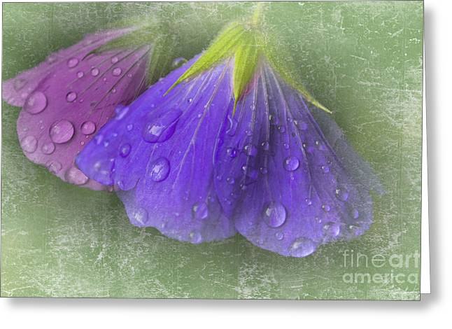Pinks And Purple Petals Photographs Greeting Cards - Bowing in the rain 2 Greeting Card by Michelle Orai