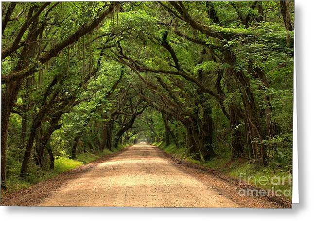 Southern Oak Trees Of The Old South Greeting Cards - Bowing Oak Trees Greeting Card by Adam Jewell