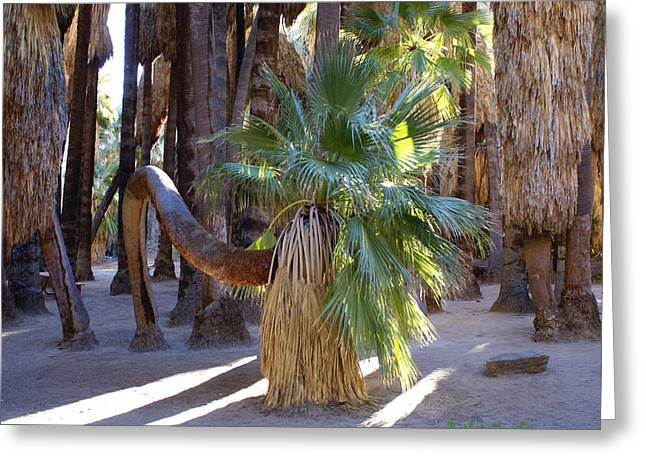 Bowing Greeting Cards - Bowing Palm Greeting Card by Barbara Snyder