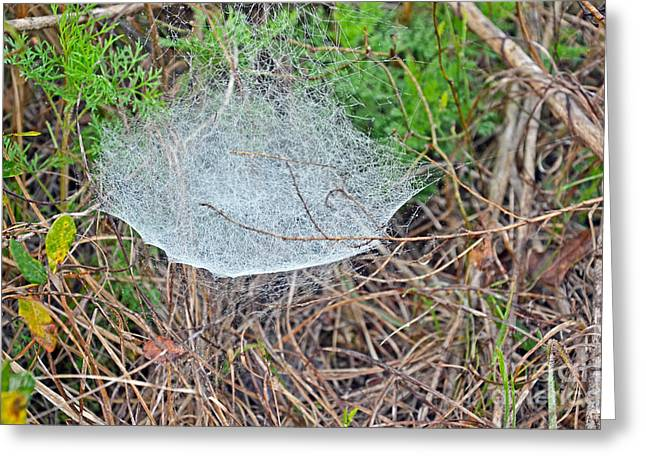 Spun Web Greeting Cards - Bowl And Doily Spider Web Greeting Card by John Serrao