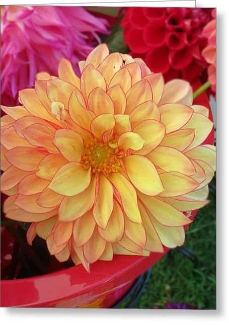 First-rate Greeting Cards - Bowl of Dahlias Greeting Card by Anne Sterling