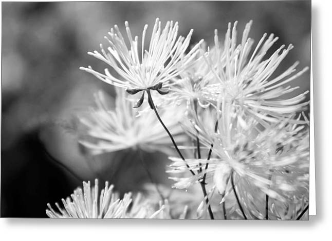 Bowtie Digital Greeting Cards - Bowtie in Black and White Greeting Card by Veronica Vandenburg