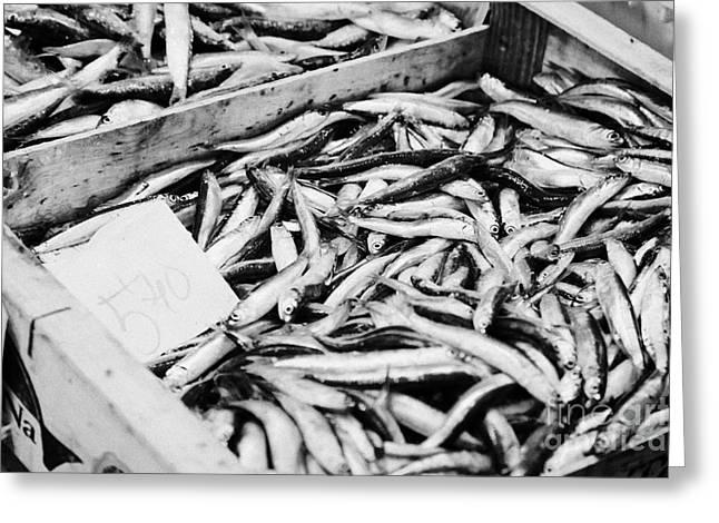 Fresh Fish Greeting Cards - Box Of Fresh Sardines Seafood At A Local Market In Tarragona Catalonia Spain Greeting Card by Joe Fox