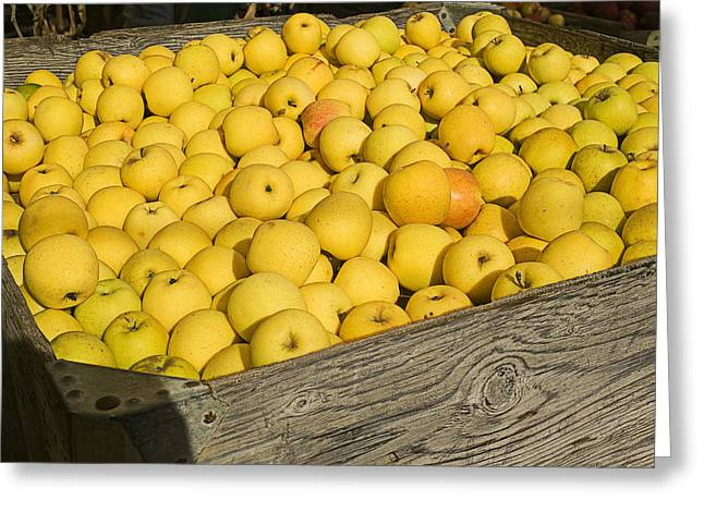 Yellow Apples Greeting Cards - Box of golden apples Greeting Card by Garry Gay