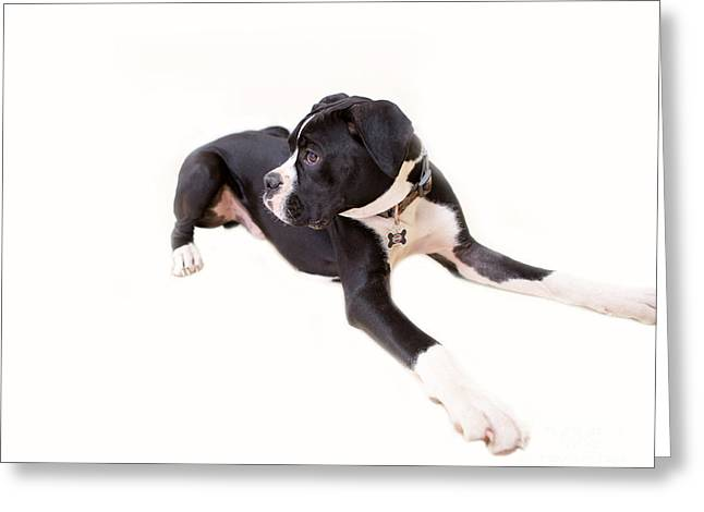 Boxer Greeting Cards - Boxer Boy 1 Greeting Card by Rebecca Cozart