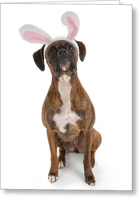 Doggy Dress Greeting Cards - Boxer Bunny Greeting Card by Suzi Nelson