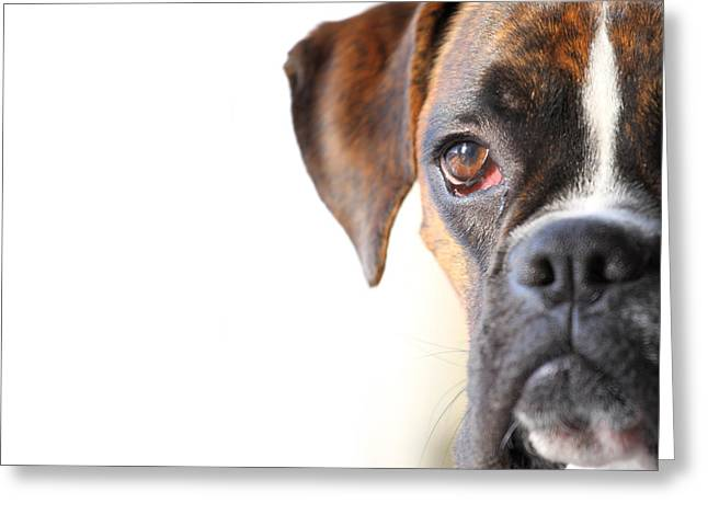 Boxer Greeting Cards - Boxer dog Greeting Card by Jana Behr